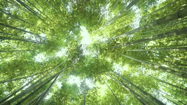 taehwa river seepri bamboo grove - narrow stock videos & royalty-free footage