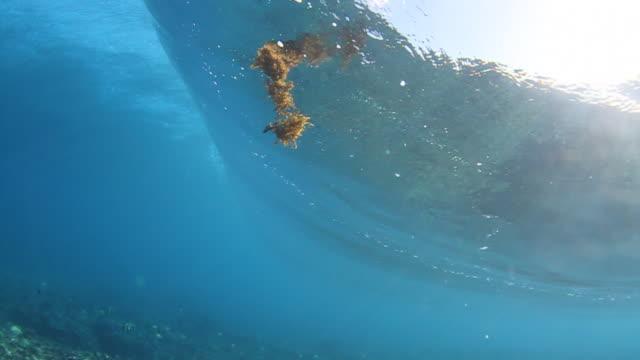 vídeos y material grabado en eventos de stock de tahiti wave underwater - pipeline wave