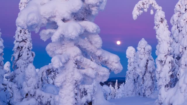 taiga forest in winter - finlandia video stock e b–roll