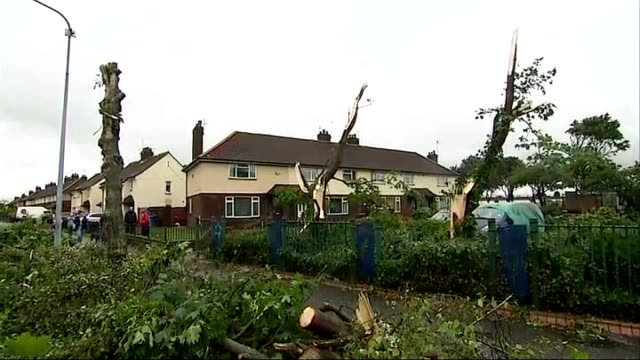 Tail end of Hurricane Bertha hits Britain ENGLAND Yorkshire Kingston upon Hull EXT Tree uprooted by minitornado caused by tail end of Hurricane...