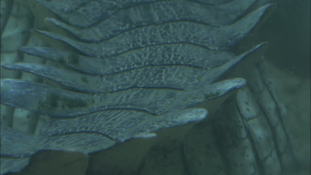 tail of adult gharial, madras crocodile bank trust, india available in hd. - scaly stock videos and b-roll footage