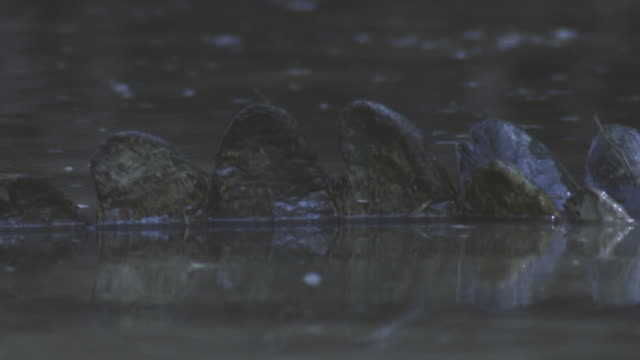slomo ecu tail scales of nile crocodile floating on river surface - ambush stock videos and b-roll footage