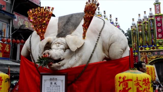Taiwan ritual slammed for cruelty to pigs which are force fed until extreme obesity CLEAN Pigs force fed until extreme obesity on February 15 2013 in...