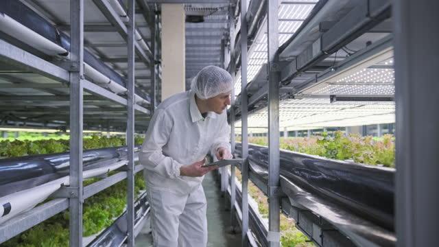 vídeos de stock, filmes e b-roll de jardineiro interior taiwanês em pé entre pilhas de culturas - biotecnologia