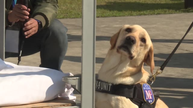 vídeos de stock e filmes b-roll de taiwan's military police shows off the latest recruits to its narcotics squad three dogs named zander enoch and hardy at a drug finding demonstration... - encontrar