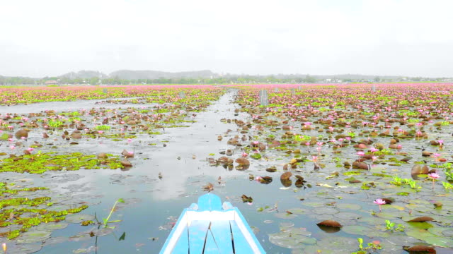 take a boat see lotus flower group - aquatic organism stock videos & royalty-free footage