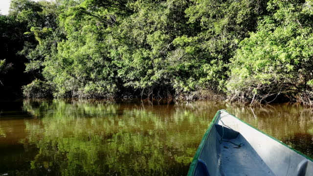 Take a slow sailing with canoe on the rivier in Cuyabeno.
