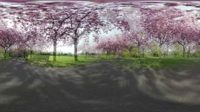 take a walk through greenwich park and see the gorgeous cherry blossom flowers. - 360 stock videos & royalty-free footage