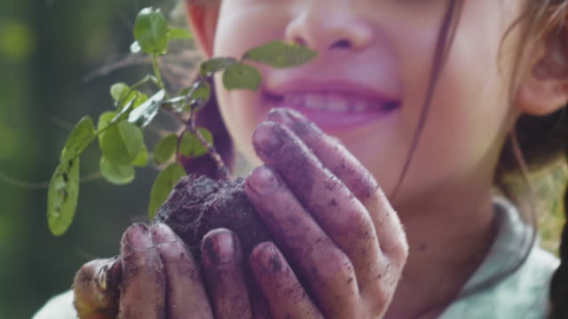 take care of young plant tree - planting stock videos & royalty-free footage