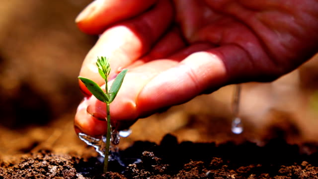 take care young tree - gardening stock videos and b-roll footage