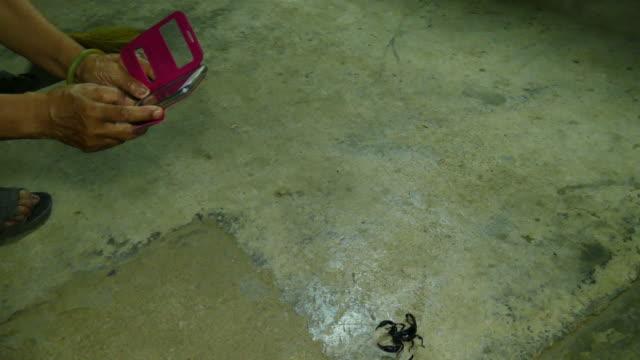 take photo black scorpion - arachnophobia stock videos and b-roll footage