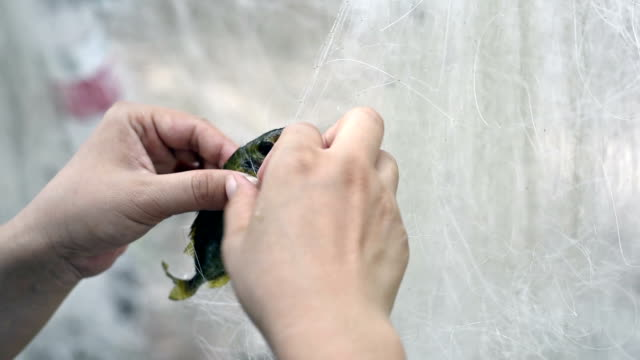 cu take the fish out of the net / shenzhen,china - fishnet stock videos and b-roll footage