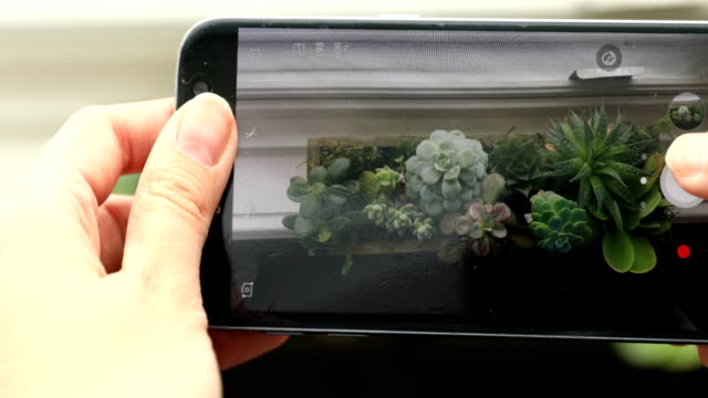 taking a picture of succulents - houseplant stock videos and b-roll footage