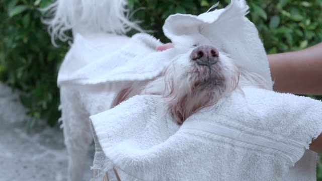taking a shower. - animal groomer stock videos and b-roll footage