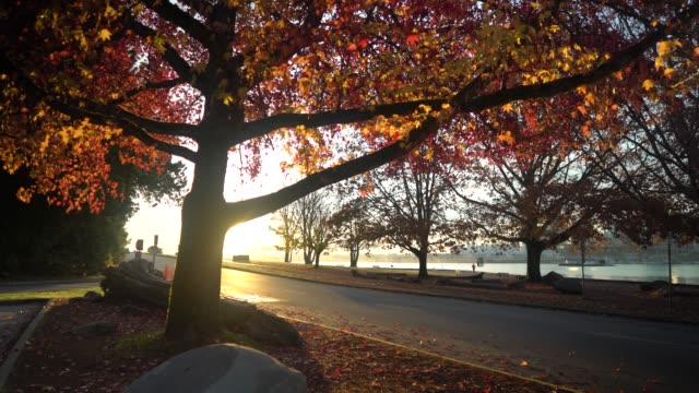 taking a stroll in a park with colorful trees and calm sea during fall - british columbia stock videos & royalty-free footage