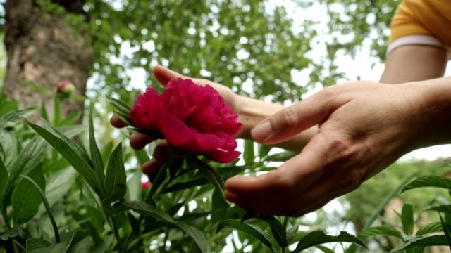 vídeos y material grabado en eventos de stock de cuidando las plantas. jardinería en un luminoso día soleado en el jardín formal. - formal garden