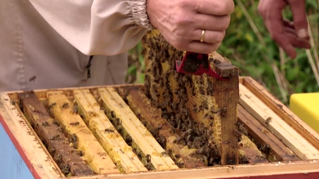 vidéos et rushes de taking out honeycomb from beehive - ruche
