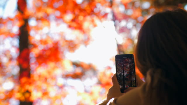 taking photo on vacation autumn season - long distance relationship stock videos & royalty-free footage