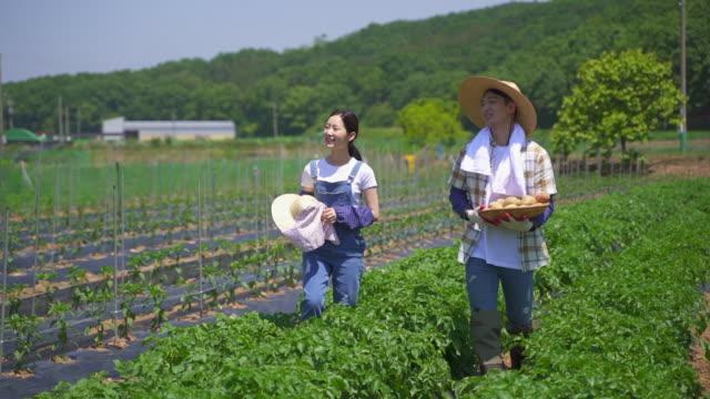 vídeos y material grabado en eventos de stock de taking up farming - married couple talking and walking while holding a basket of potatoes at the agricultural field - oficio agrícola