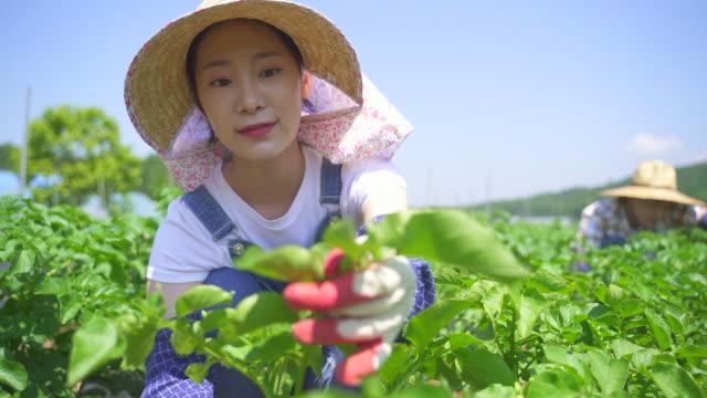taking up farming - married couple working at the agricultural field - koreanskt ursprung bildbanksvideor och videomaterial från bakom kulisserna