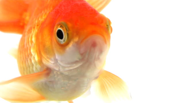 talking fish ii - one animal stock videos & royalty-free footage