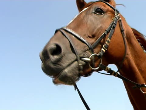 vidéos et rushes de parler cheval (entrelacée version - harnais de sécurité