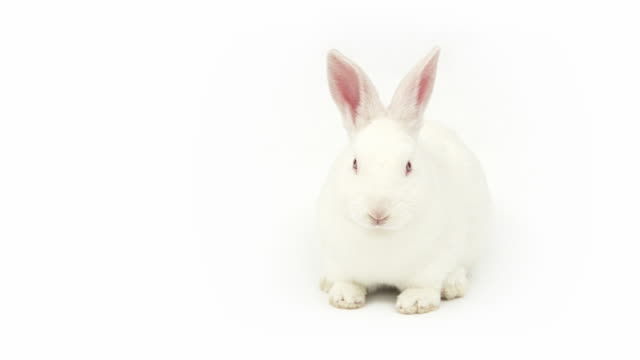 talking rabbit - rabbit animal stock videos & royalty-free footage