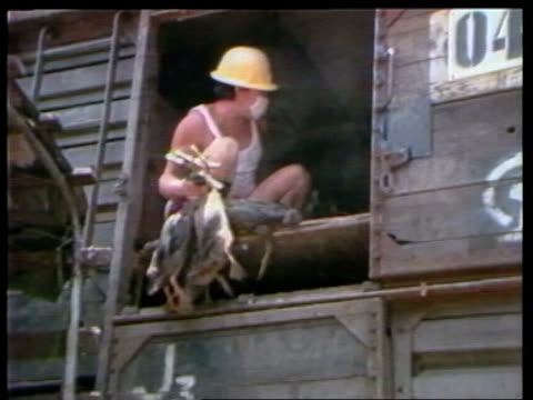 vídeos de stock, filmes e b-roll de talks with china continue; itn lib hong kong: kowloon: chinese freight train r-l poultry unloaded from train hong kong gv people walking in street... - kowloon