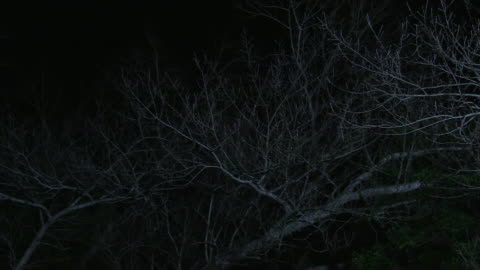 tall and wide leafless tree - woodland stock videos & royalty-free footage