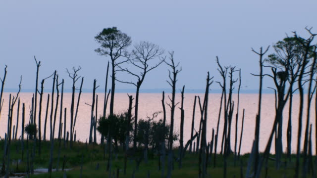Tall, bare tree trunks stand silhouetted against a pastel blue sky along the Gulf Islands National Seashore in Mississippi.
