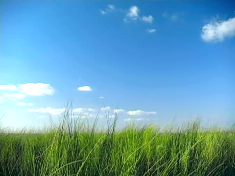 tall breezy grass - reed grass family stock videos and b-roll footage