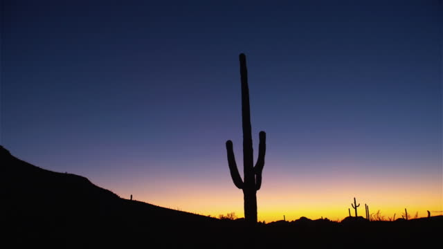 a tall cactus stands in silhouette against an indigo sky. - cactus silhouette stock videos & royalty-free footage