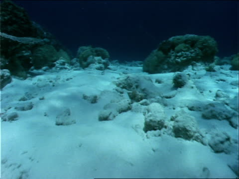 a tall coral reef rises from the pacific ocean floor. - micronesia stock videos & royalty-free footage