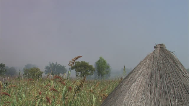 tall crops wave in a breeze near a hut with a thatched roof. - thatched roof stock videos & royalty-free footage