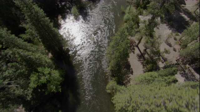 tall evergreens tower over the kings river in california. available in hd. - riverside california stock videos and b-roll footage