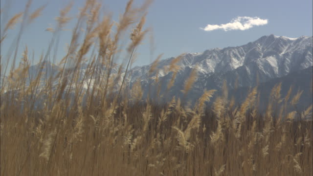 ms, tall golden grass with mountains in background, owens valley, california, usa - tall high stock videos & royalty-free footage