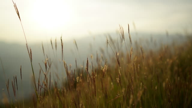 tall grass blowing in the wind at viewpoint - ticino canton stock videos and b-roll footage