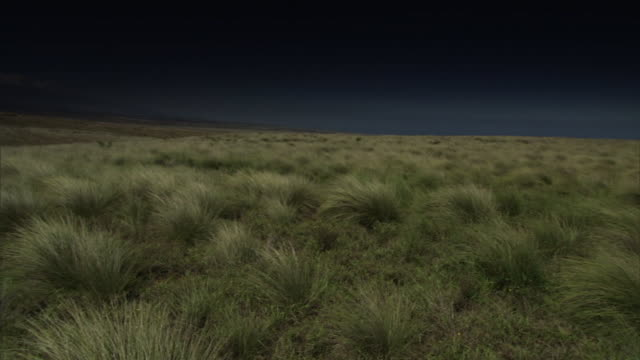 tall grass covers scrublands at the big island's place of refuge in hawaii. - shrubland stock videos & royalty-free footage