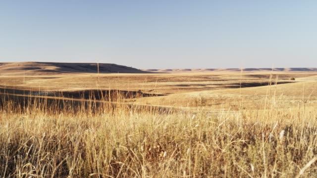 tall grass prairie at sunset - remote location点の映像素材/bロール