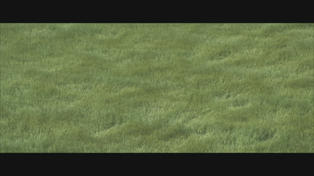 AERIAL, Tall green grass blowing in wind