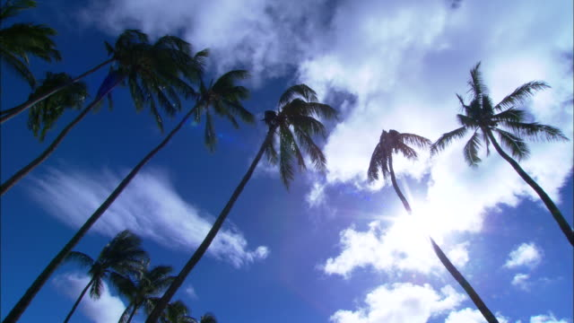 MS, LA, Tall palm trees gently swaying in breeze against sky, Kahoolawe, Hawaii, USA
