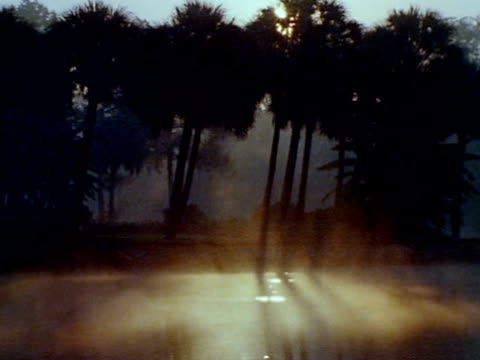Tall palm trees silhouetted by sun rising behind fronds BG fog rising on marsh water FG * ICONIC Southern United States vanishing marsh protected...