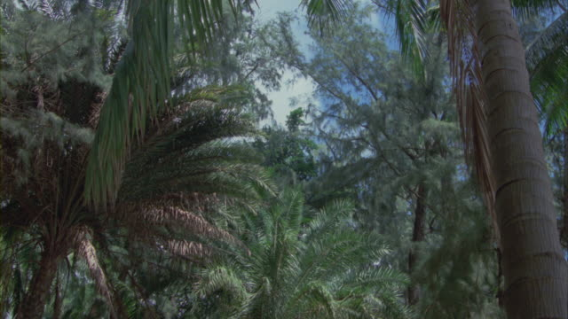 Tall palm trees sway in a rainforest.