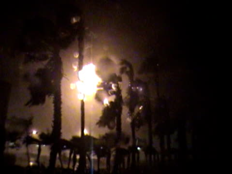 Tall palm trees violently blowing during major hurricane at night.