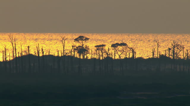 Tall, sparse trees stand silhouetted against the Gulf of Mexico's rippling, golden water in Mississippi.