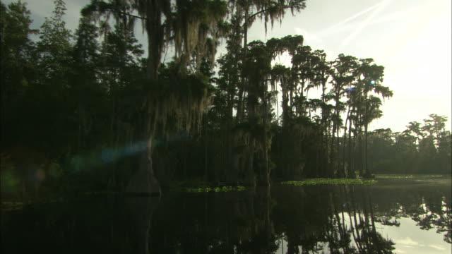 tall trees grow in the okefenokee swamp. - オケフェノキー国立野生生物保護区点の映像素材/bロール