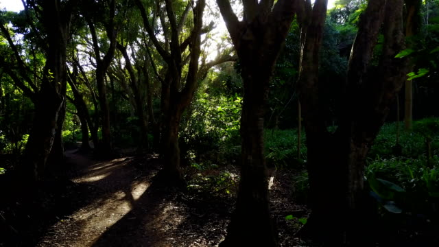 tall trees growing on side of remote pathway on maui island - sentiero video stock e b–roll