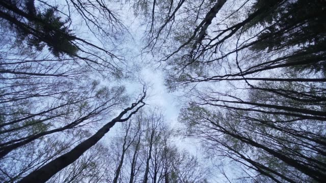 tall trees tower over forest floor - directly below stock videos & royalty-free footage