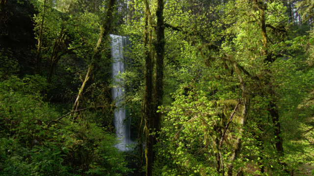 WIDE SHOT tall waterfall in lush green forest