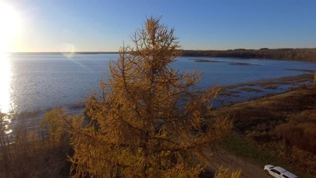vídeos y material grabado en eventos de stock de tamarack forest & lakeshore - pinaceae